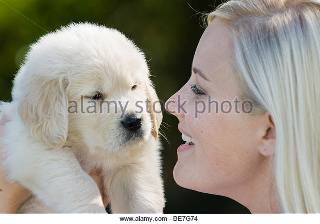Young woman holding a golden retriever puppy - Stock Image