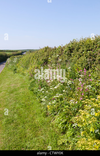 Malborough Stock Photos & Malborough Stock Images - Alamy