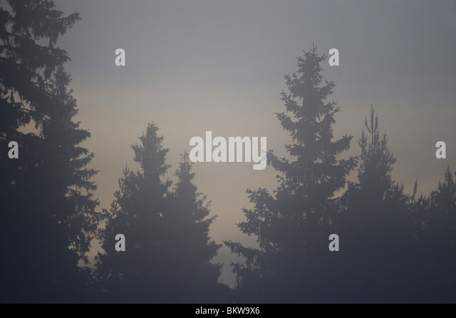 Treetops in the mist - Stock Image