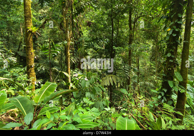 Jungle at Arenal Hanging Bridges where rainforest canopy is accessible via walkways, La Fortuna, Alajuela Province, - Stock-Bilder