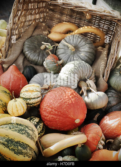 English Squash varieties on display for sale outside at a typical UK farm shop - Stock Image