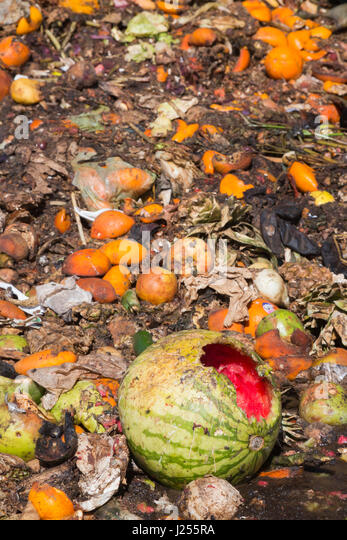 Tucson, Arizona - The Compost Cats, a University of Arizona student organization, composts food waste from the city - Stock Image