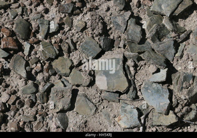 Turtle shell fossils Utah Great Basin desert - Stock Image