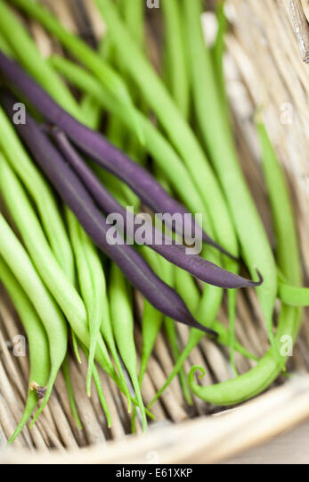 French Beans in Basket - Stock Image