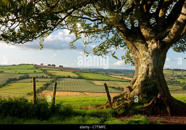 Summer fields in the Devon countryside, Raddon Hills, Devon, England. Summer (June) 2011. - Stock Image