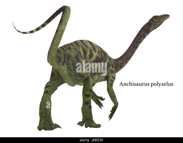 Anchisaurus was a omnivorous prosauropod dinosaur that lived in the Jurassic Periods of North America, Europe and - Stock Image