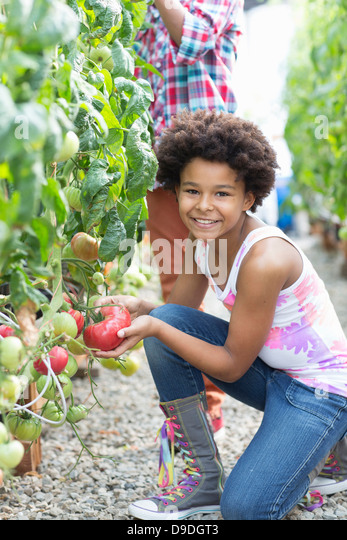 Children picking fresh tomatoes - Stock Image