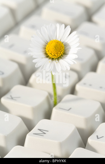 Computer Keyboard and flower, concept of Cyberspace Freedom - Stock-Bilder