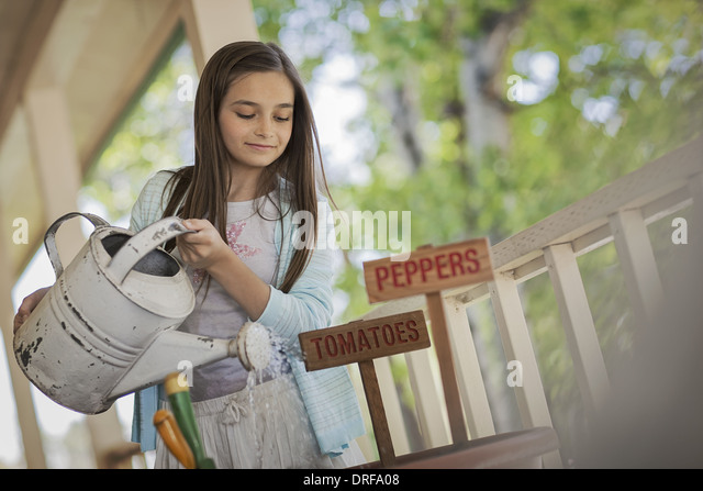 Utah USA child watering pot with tomato and pepper seeds - Stock Image