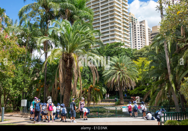 Australia Queensland Brisbane Central Business District CBD City Botanic Gardens skyline skyscrapers buildings trees - Stock Image