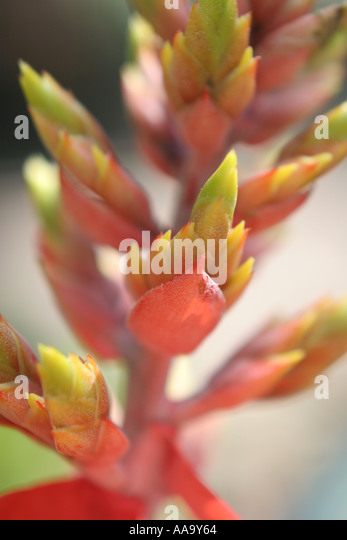 Florida, tropical plant, flora, growing, life, - Stock Image
