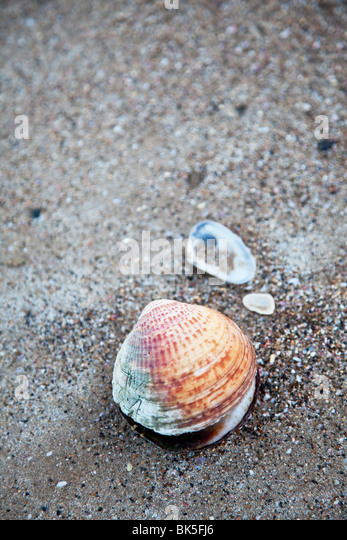 sand and shell background - Stock-Bilder