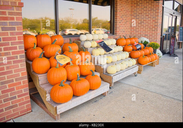 Pumpkins and gourds for sale and on display outside of a Fresh Market grocery store, ready for the Halloween holiday - Stock Image