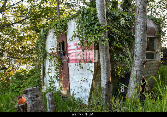 Vintage Travel Trailer Tour-A-Home, with encroaching Spanish Ivy,  resting under a grove of Alder trees. - Stock-Bilder