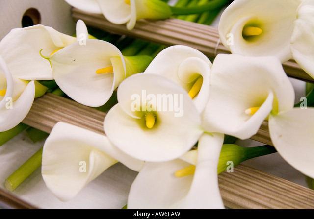 New Covent Garden flower and fruit market, Vauxhall, London, 15th Feb 2008 - Stock Image