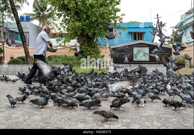 pigeon buddhist dating site Please help, dating sites to meet buddhists kashi i really wish new buddhist had a section for online dating because i honestly believe that would help.