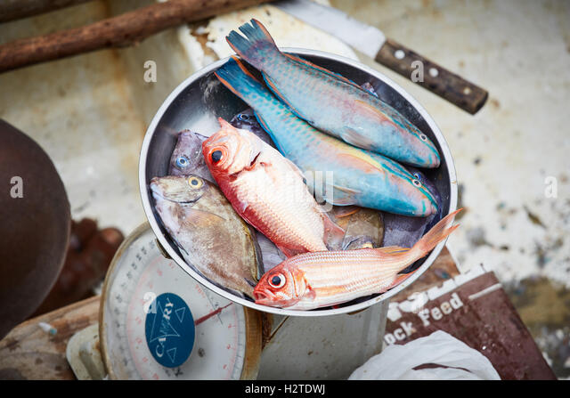 Woman fishing caribbean stock photos woman fishing for Fisher fish chicken indianapolis in
