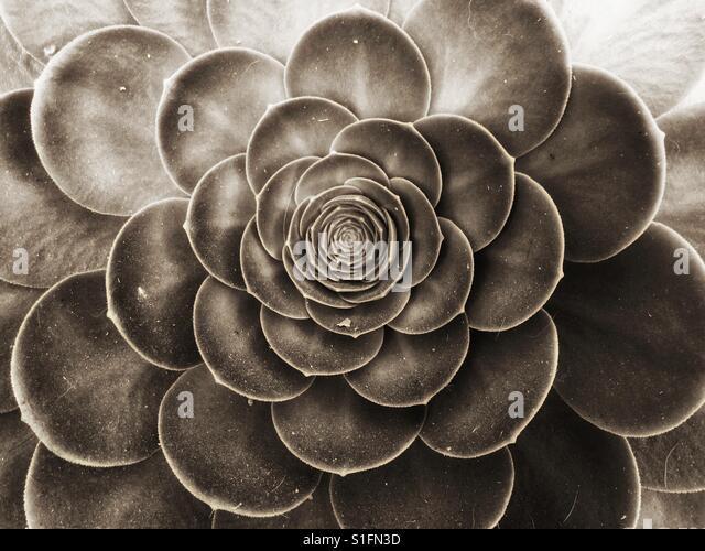 Succulent - Stock-Bilder
