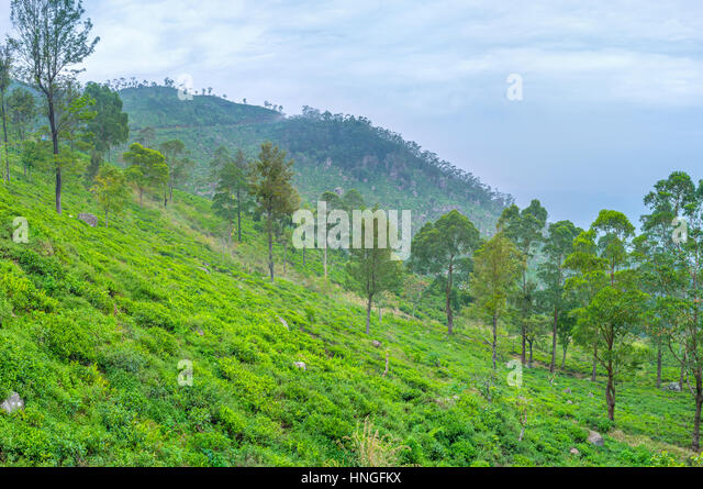 Sri Lanka Mountain area has a cool climate and can vary the hot beach holiday - Stock-Bilder