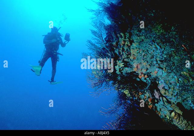Los Roques Archipelago Venezuela diver underwater - Stock Image