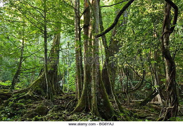 Tropical rainforest Thailand - Stock Image