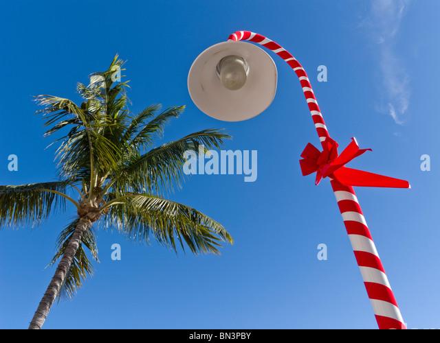Christmas Palm Stock Photos Amp Christmas Palm Stock Images