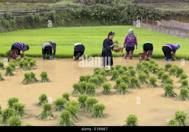 Sin chai stock photos sin chai stock images alamy for The terrace group