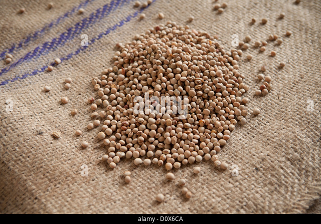 Pigeon peas (lentils or pulses) at a commodities warehouse in Dar es Salaam, Tanzania, East Africa. - Stock Image