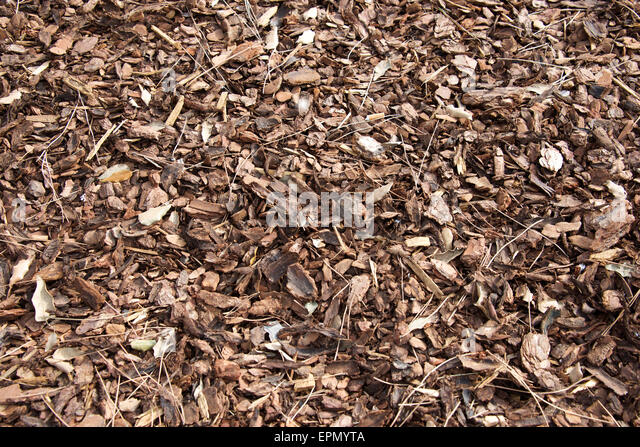 Cedar Wood Chips ~ Wood chip garden stock photos