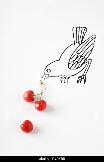 Ripe cherries and drawing of bird - Stock-Bilder