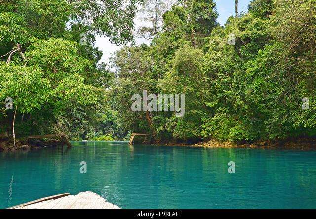Into the jungle of Labuan Cermin Lake - Stock Image