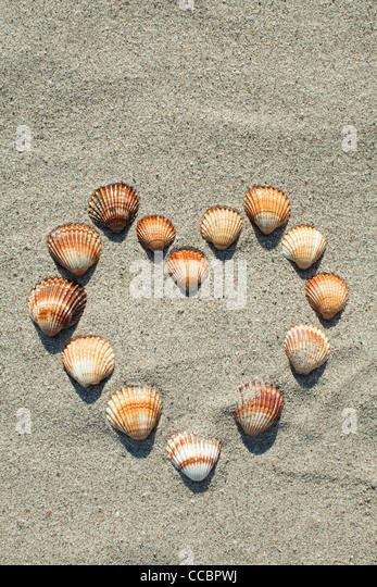 Seashells arranged in heart shape on sand - Stock Image