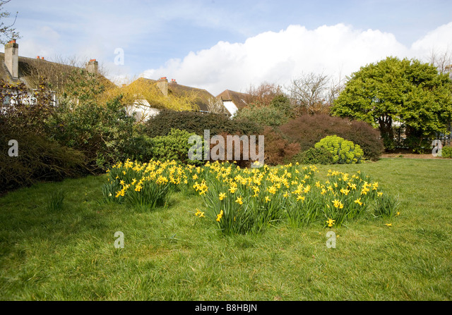 Daffodils in spring in a park - Stock Image