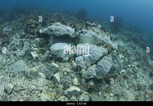 Dead Coral Fish Stock Photos & Dead Coral Fish Stock ...