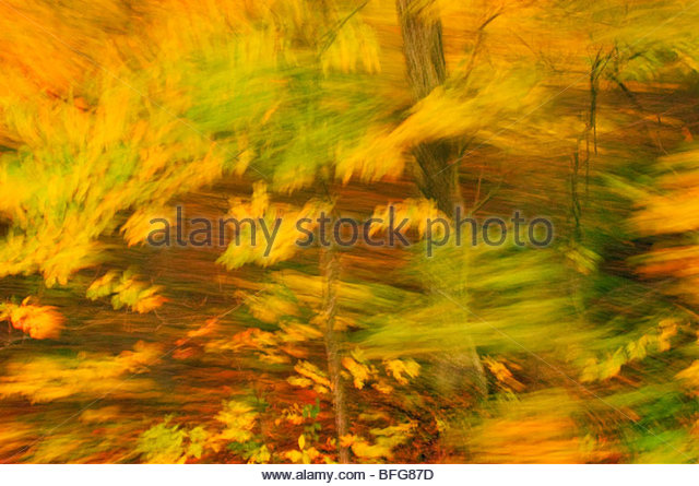 Fall color impression, Virginia - Stock Image