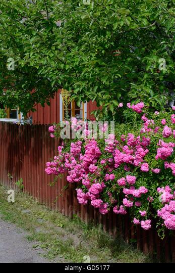 schweden stock photos schweden stock images alamy. Black Bedroom Furniture Sets. Home Design Ideas