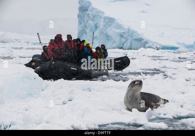 Tourists in a Zodiac looking at a leopard seal (Hydrurga leptonyx), Enterprise Island, Antarctica, Polar Regions - Stock Image