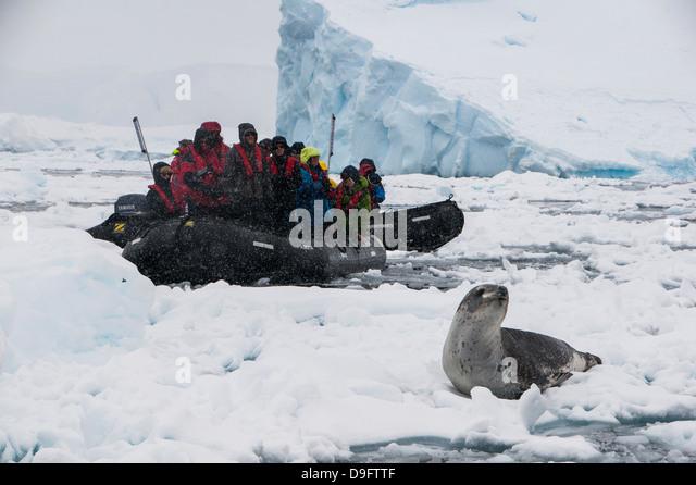 Tourists in a Zodiac looking at a leopard seal (Hydrurga leptonyx), Enterprise Island, Antarctica, Polar Regions - Stock Image