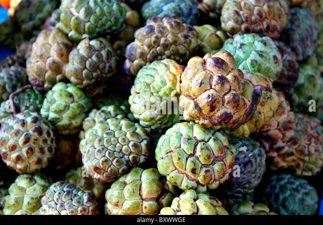 Sugar-apple ( Annona squamosa ) - Stock Image
