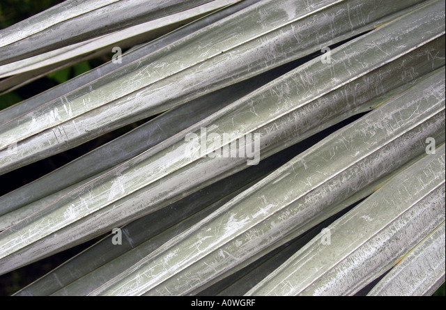 Cayman Islands Silver Thatch Palm Fronds - Stock Image