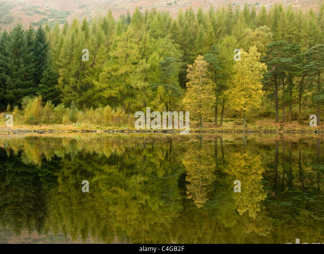 A misty autumn day at Blea Tarn in the English Lake District - Stock Image