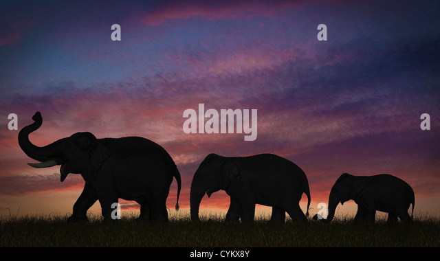 Silhouette of elephants against sky - Stock-Bilder