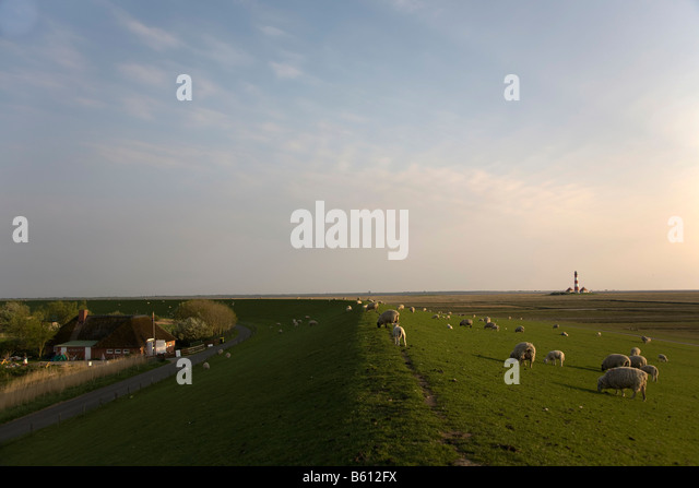 Westerheversand lighthouse in the mud flat foreshore, Westerhever, North Sea, Northern Frisia, Schleswig-Holstein, - Stock Image