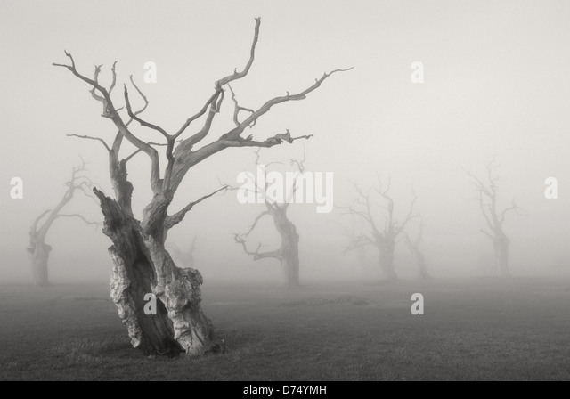 Petrified Oak Trees - Stock Image