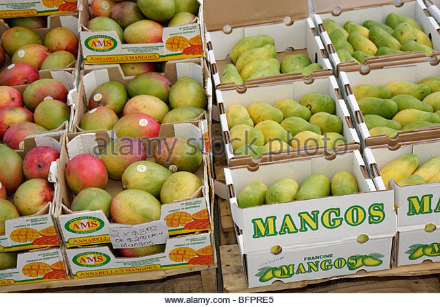 Miami Beach Florida Lincoln Road pedestrian mall farmers market cardboard box crate mangos tropical fruit import - Stock Image