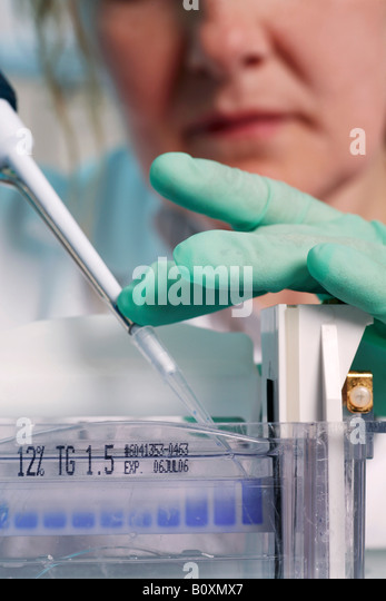 Genetic engineering, using a pipette, close up - Stock Image