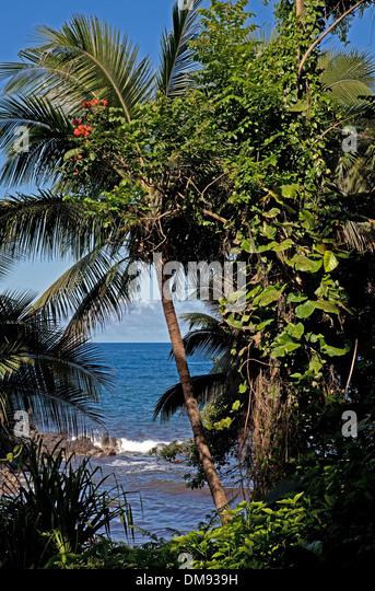 Anthuriums Big Island Hawaii
