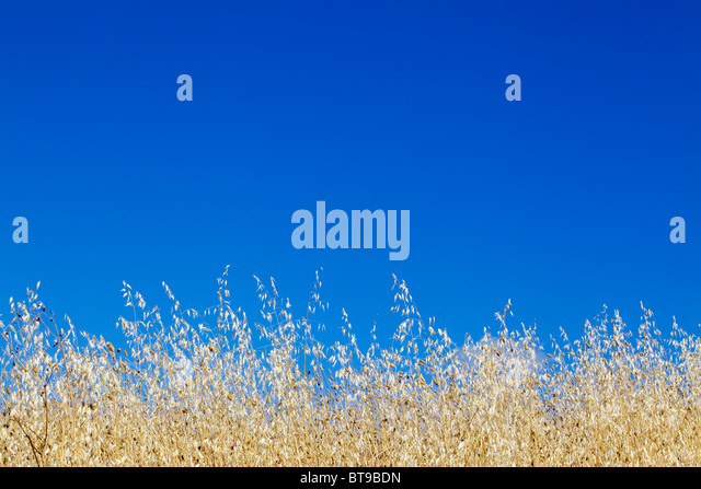 Summer Day - Tuscany, Italy - Stock Image