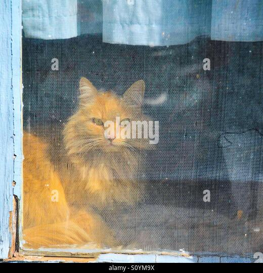 Kitty in the window - Stock Image