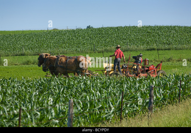 Amish farmer plowing field with team of horses near Shipshewana Indiana - Stock Image